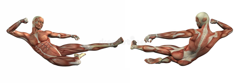3d rendent l'illustration du système musculaire illustration stock