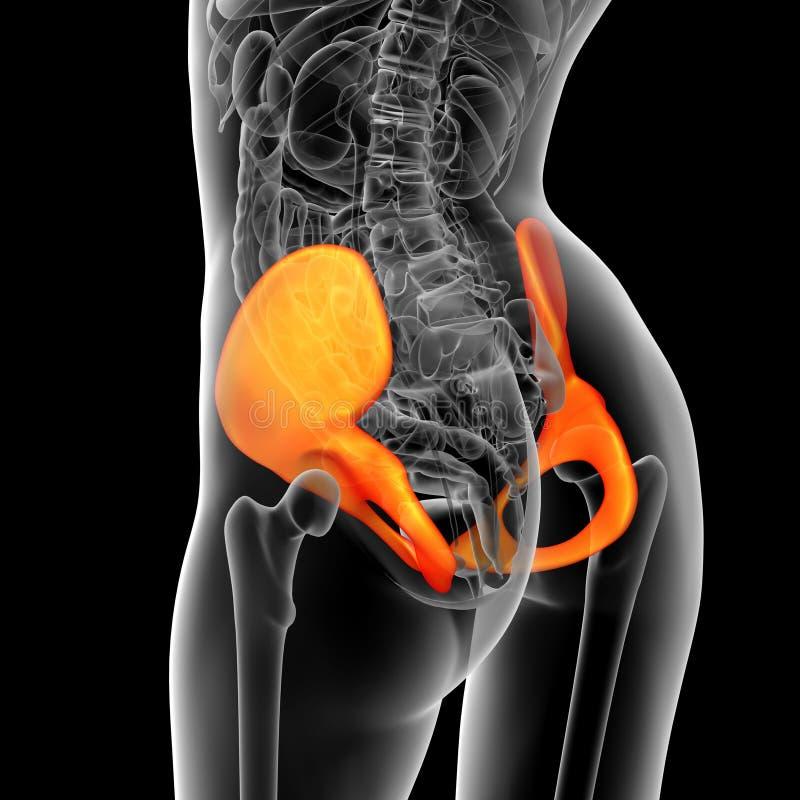 3d rendent l'illustration médicale de l'os de bassin illustration stock