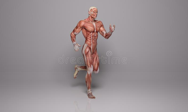 3D rendent : une illustration d'un homme courant avec des tissus de muscle illustration libre de droits