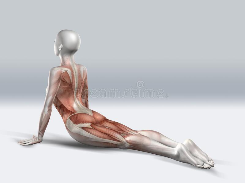 3D Female Figure in Laid down Leg Raise Pose with Muscles