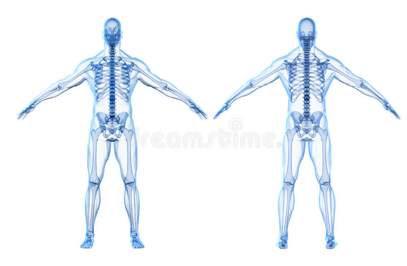 3d Render Of Human Body And Skeleton Stock Illustration