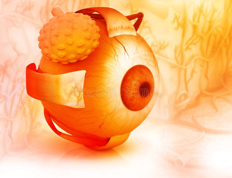 Human eye structure. 3d render of Human eye structure vector illustration