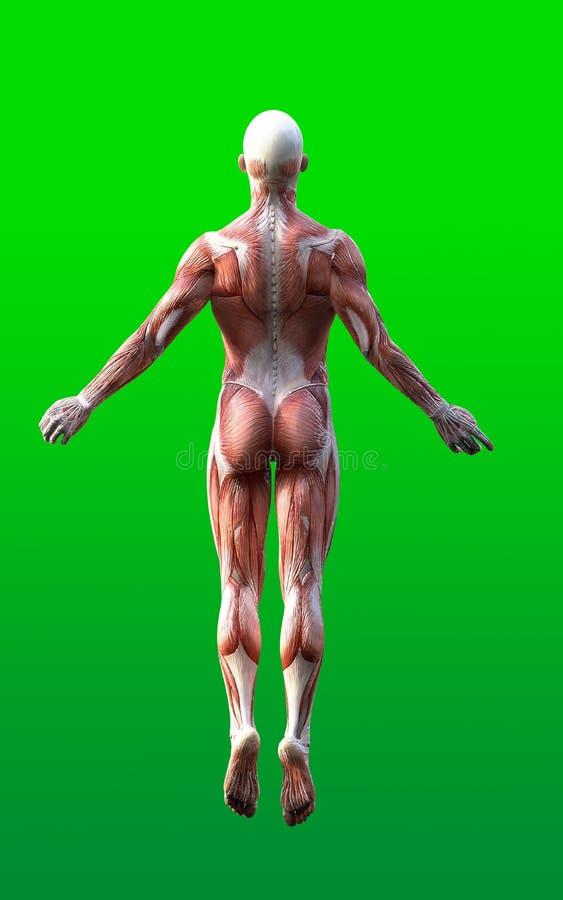 3D render of male figures pose royalty free illustration