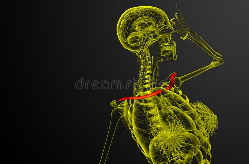 3d render medical illustration of the clavicle bone stock illustration