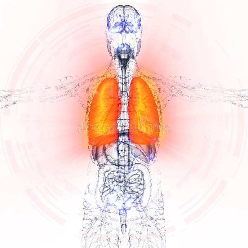 3d Render Medical Illustration Of The Human Lung Stock Illustration