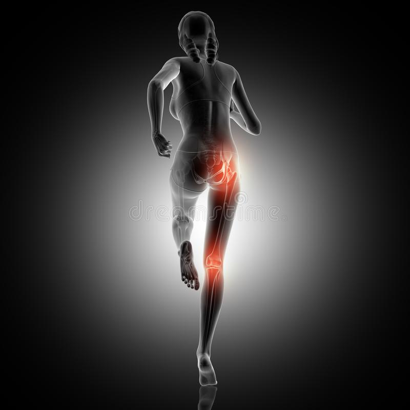 3D rear view of a female running with knee and hip joint highlighted. 3D render of a rear view of a female running with knee and hip joint highlighted royalty free illustration
