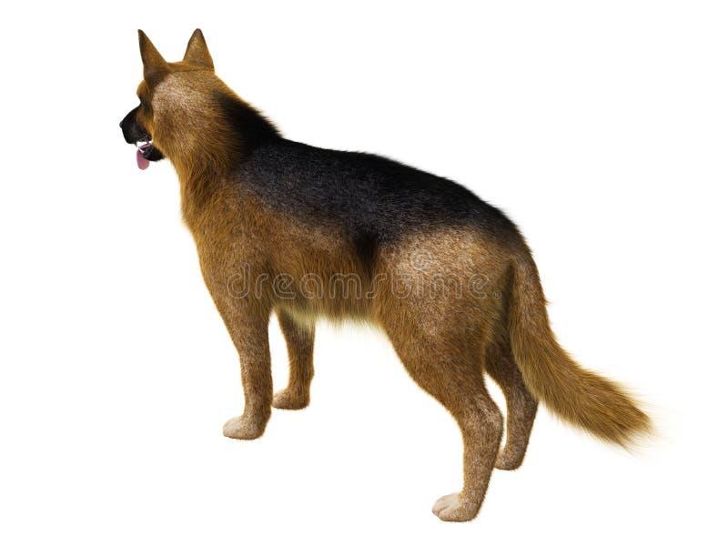3D  GERMAN SHEPHERD DOG POSTCARD-015