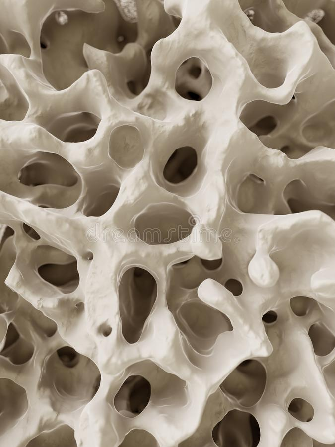 The human bone structure. 3d rendered illustration of the human bone structure stock illustration