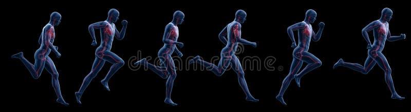 A running mans heart. 3d rendered illustration of a running mans heart vector illustration
