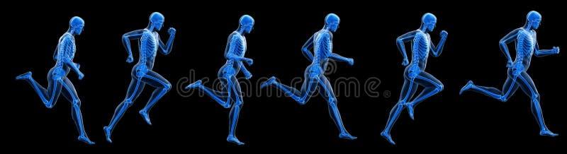 A running mans skeleton. 3d rendered illustration of a running mans skeleton royalty free illustration