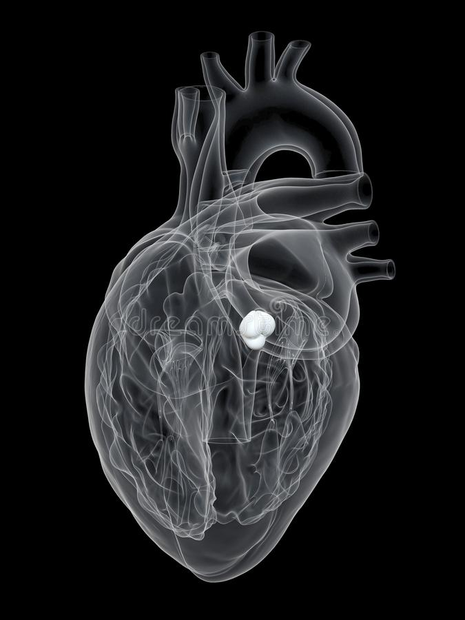 The aortic valve royalty free illustration