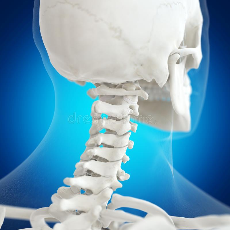 The atlas bone. 3d rendered medically accurate illustration of the atlas bone stock illustration