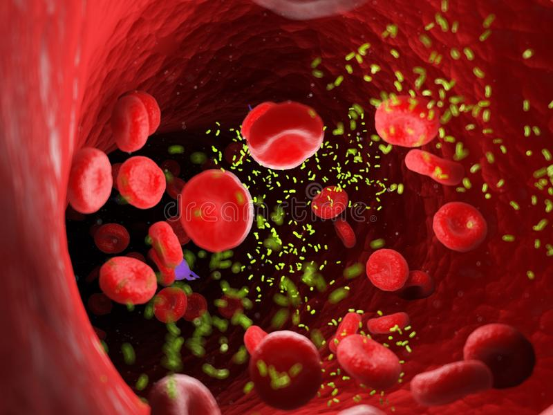 Bacterias in an artery vector illustration