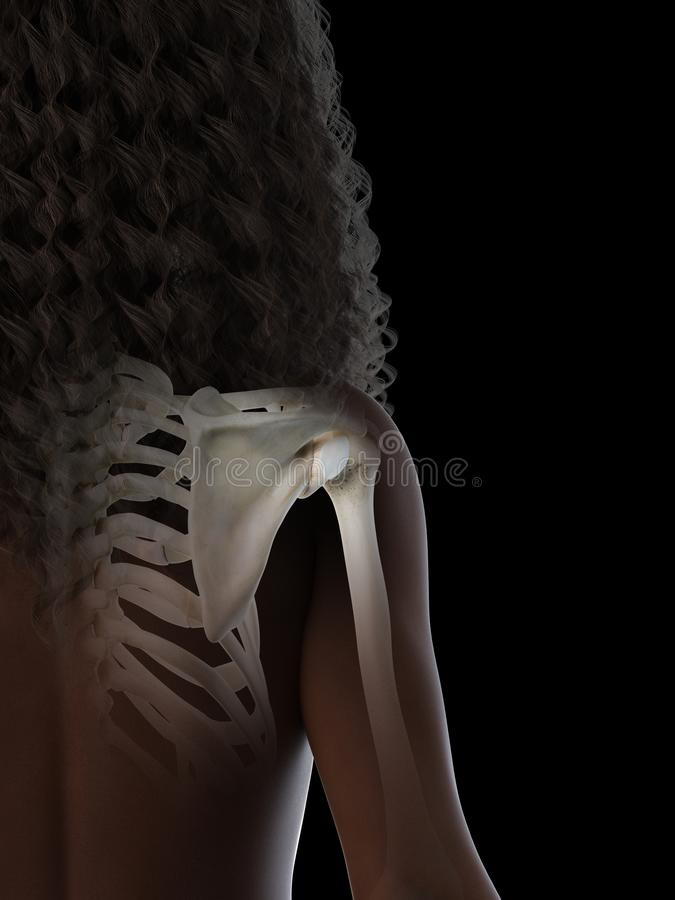 A black females shoulder joint. 3d rendered medically accurate illustration of a black females shoulder joint stock illustration