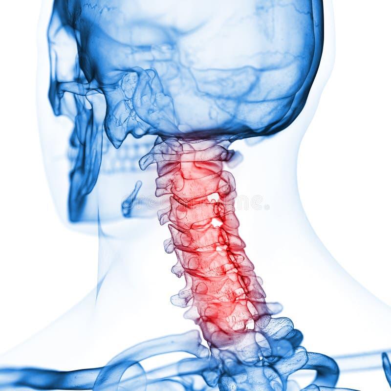 The cervical spine royalty free illustration