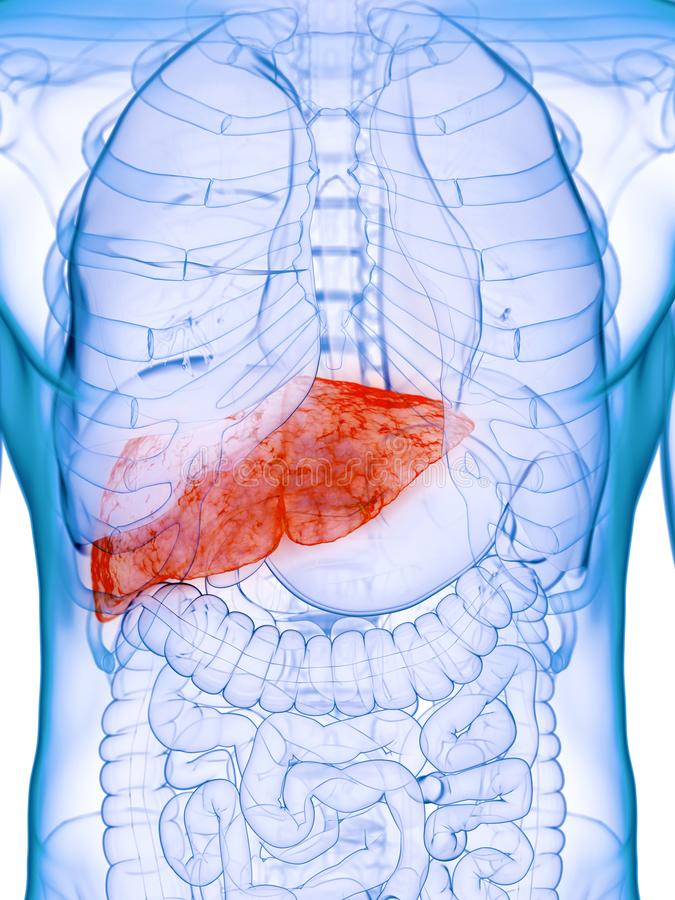 A diseased liver. 3d rendered medically accurate illustration of a diseased liver stock illustration