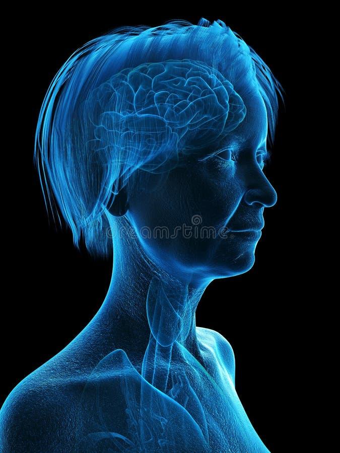 An elder females head anatomy stock illustration