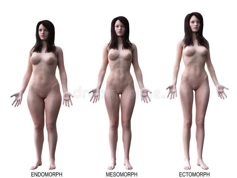 The female body types. 3d rendered medically accurate illustration of the female body types vector illustration