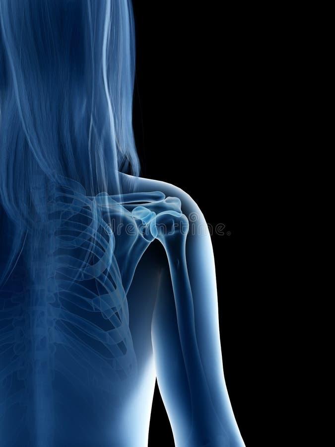 A females shoulder joint. 3d rendered medically accurate illustration of a females shoulder joint stock illustration