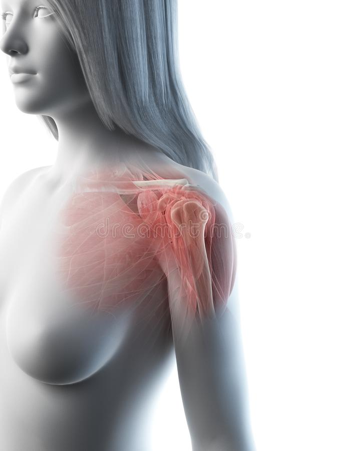 A females shoulder muscles stock illustration