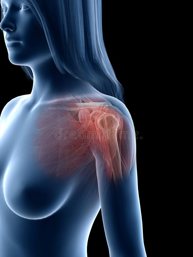A females shoulder muscles vector illustration