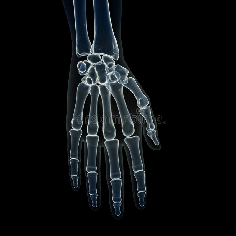 The hand bones royalty free illustration