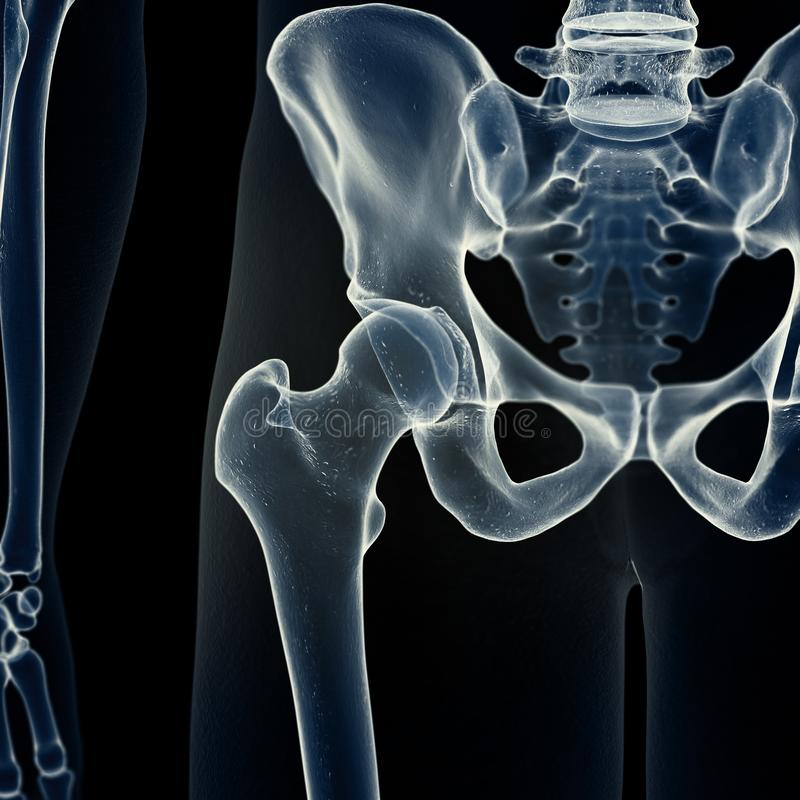 the hip joint vector illustration