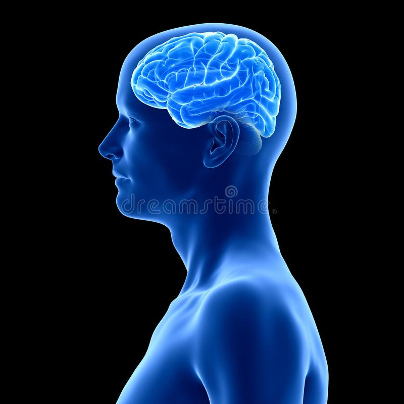The human brain. 3d rendered medically accurate illustration of the human brain vector illustration
