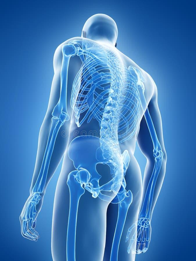 The human skeletal system vector illustration