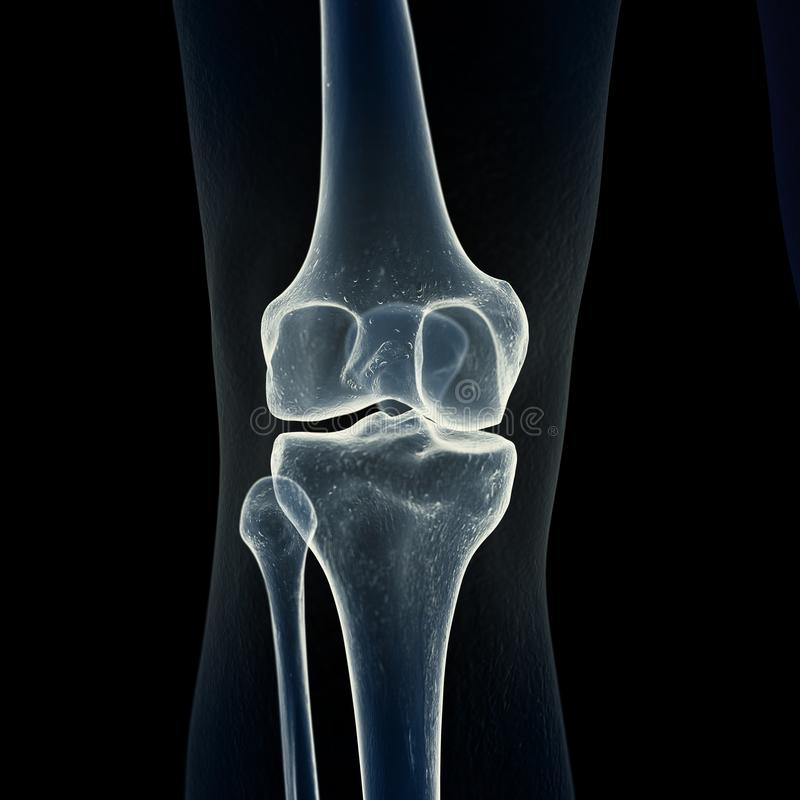 the knee bones vector illustration