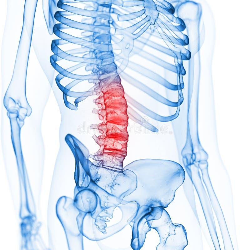 The lumbar spine royalty free illustration