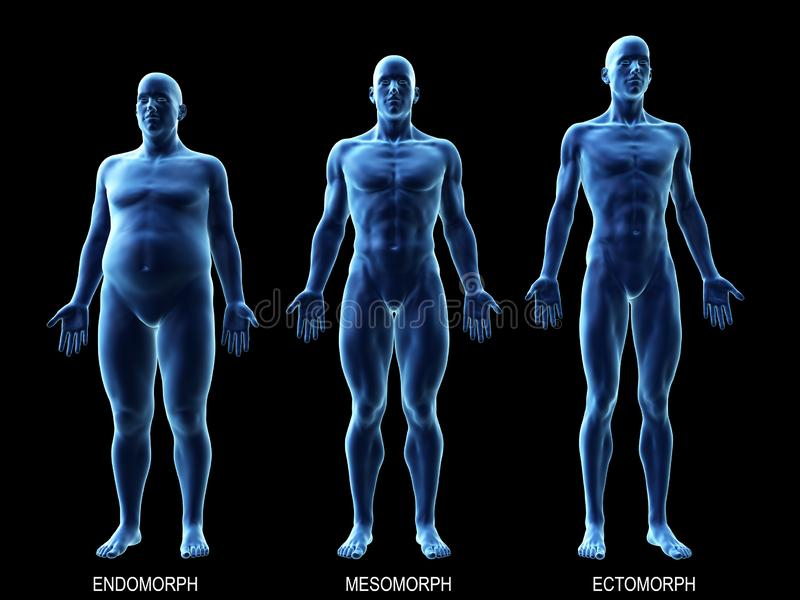 The male body types. 3d rendered medically accurate illustration of the male body types stock illustration
