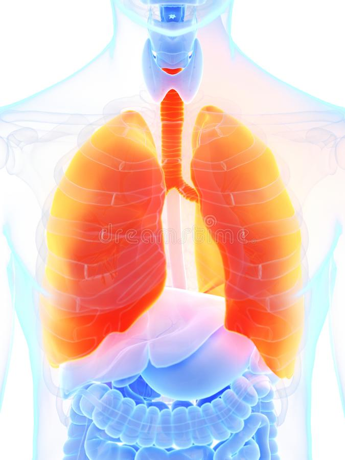 A mans lung. 3d rendered medically accurate illustration of a mans lung royalty free illustration