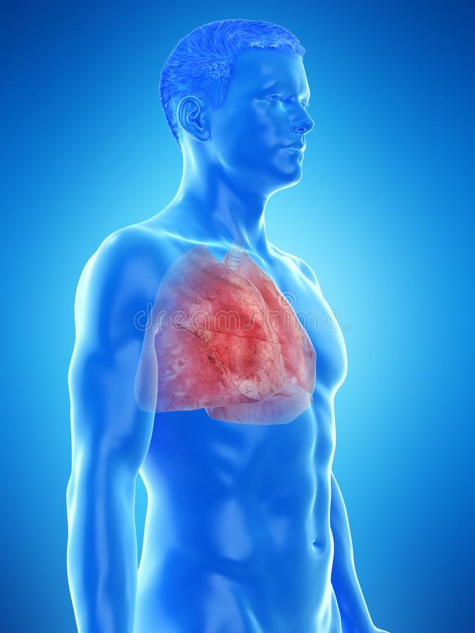 A mans lung. 3d rendered medically accurate illustration of a mans lung stock illustration