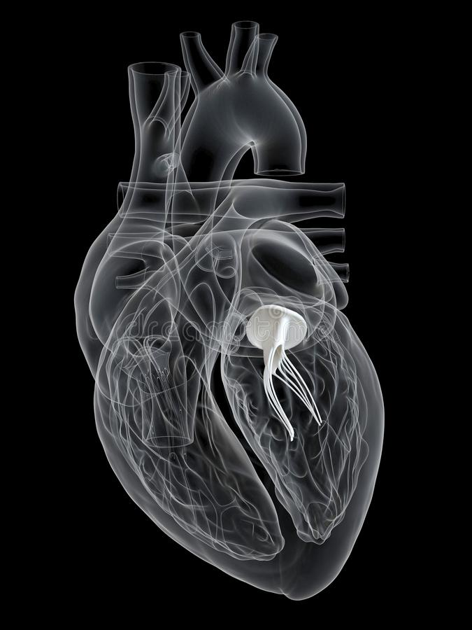 The mitral valve. 3d rendered medically accurate illustration of the mitral valve royalty free illustration