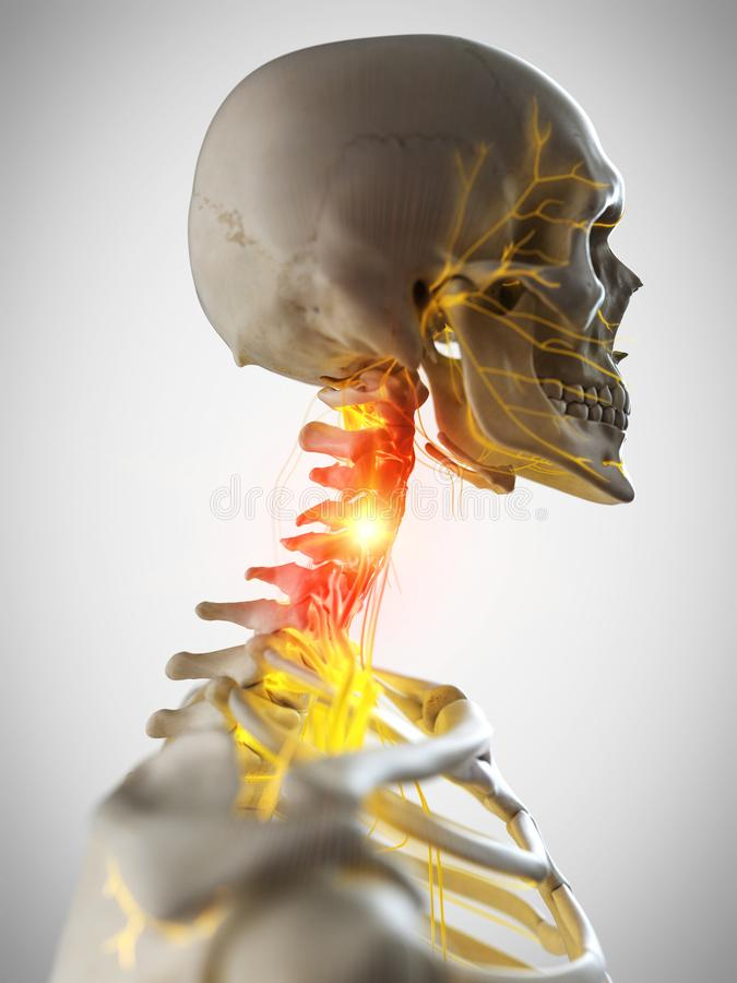 The nerves of the neck stock illustration
