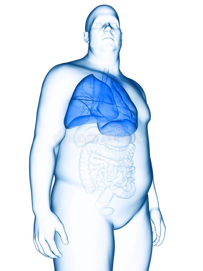 An obese mans lung. 3d rendered medically accurate illustration of an obese mans lung royalty free illustration