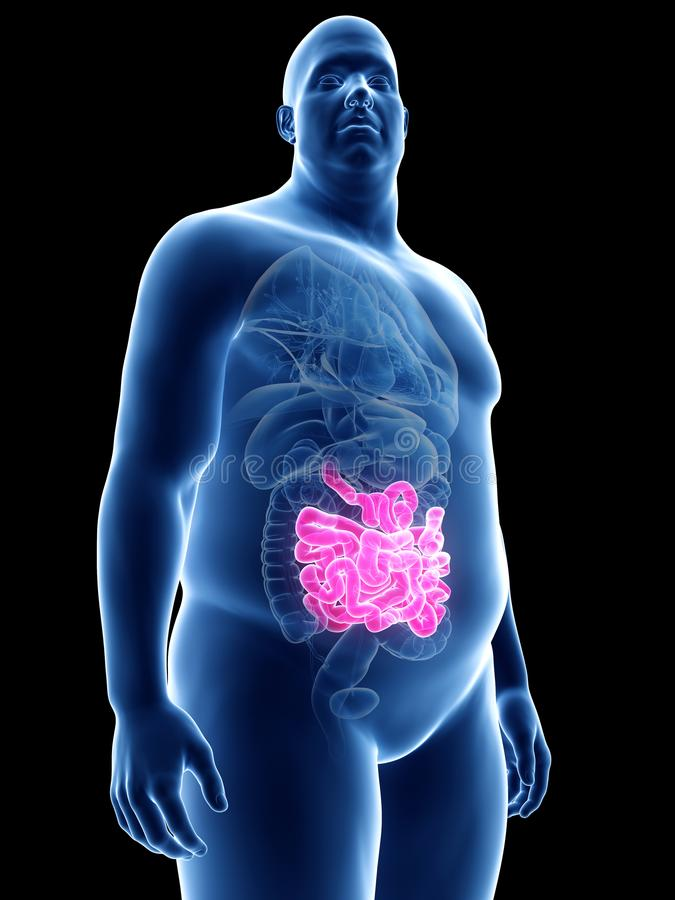 Obese mans small intestines stock illustration