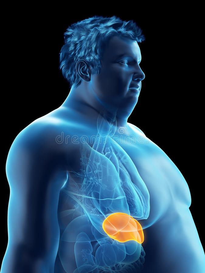 An obese mans spleen. 3d rendered medically accurate illustration of an obese mans spleen vector illustration