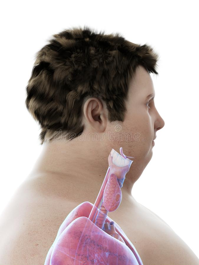 An obese mans throat anatomy. 3d rendered medically accurate illustration of an obese mans throat anatomy stock illustration