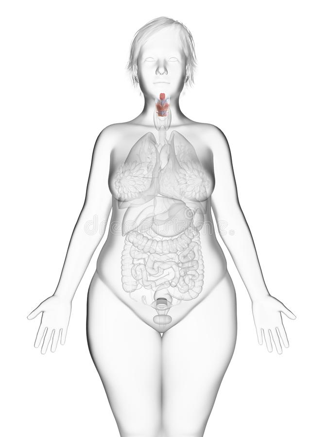 An obese womans larynx. 3d rendered medically accurate illustration of an obese womans larynx stock illustration