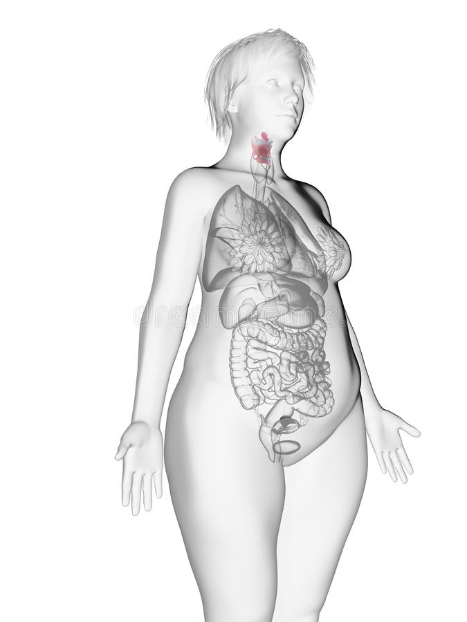 An obese womans larynx. 3d rendered medically accurate illustration of an obese womans larynx royalty free illustration