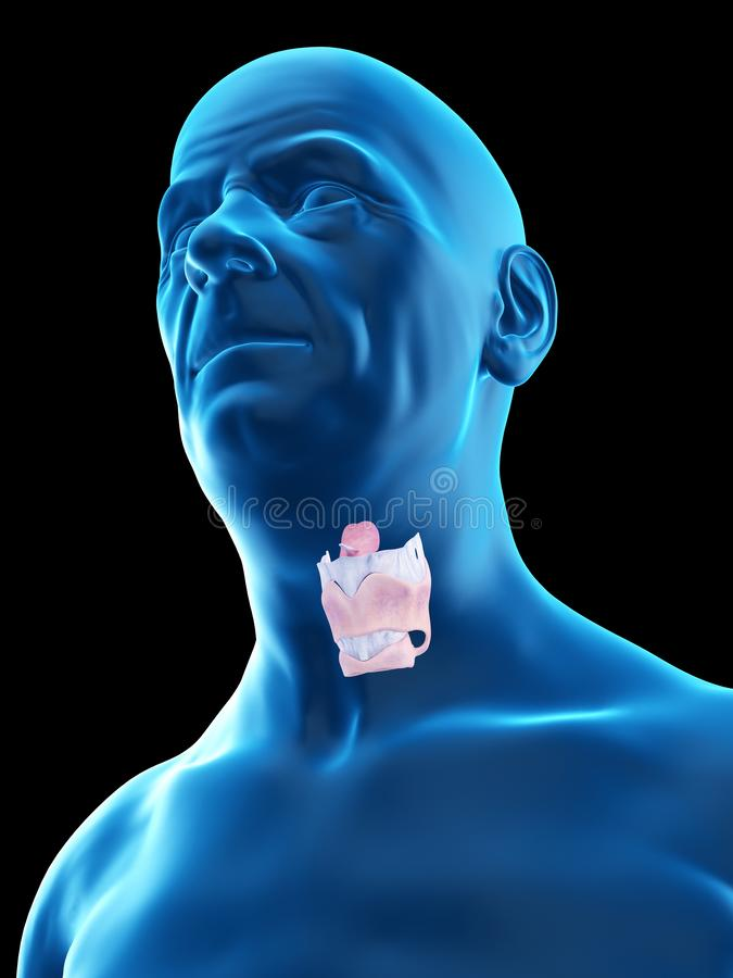 An old mans larynx. 3d rendered medically accurate illustration of an old mans larynx vector illustration