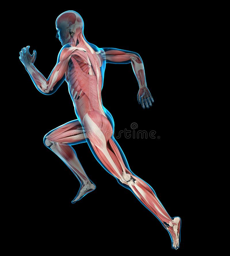 Runners muscles royalty free illustration