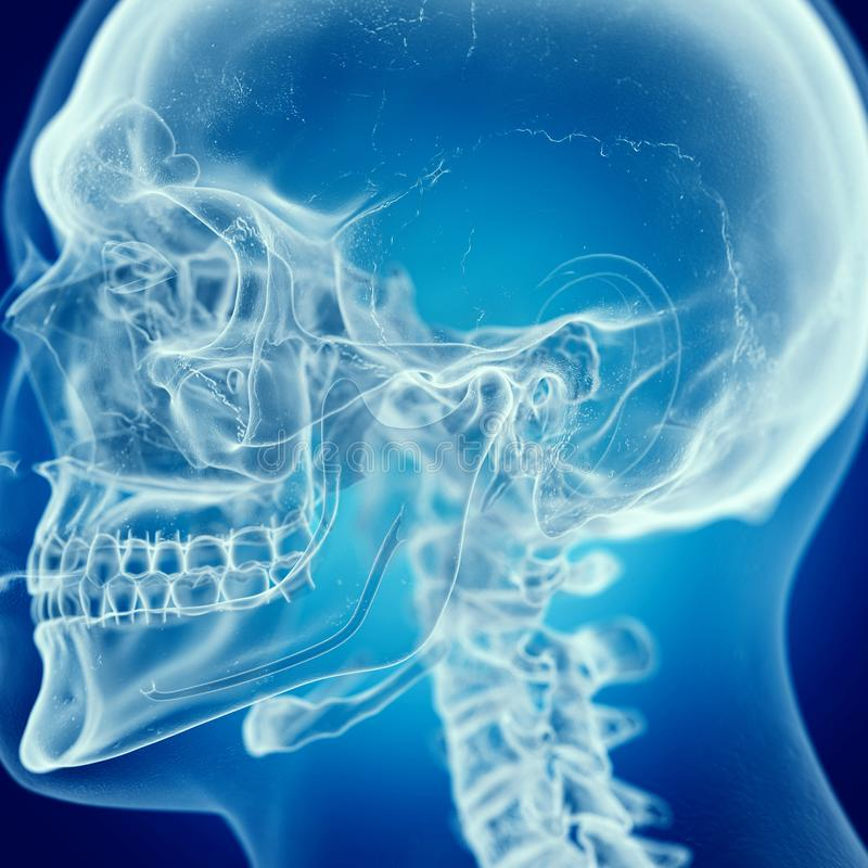 The skull. 3d rendered medically accurate illustration of the skull stock illustration