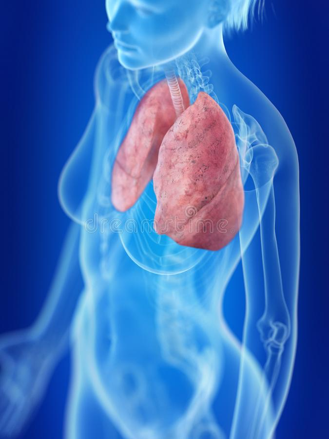 A womans lung. 3d rendered medically accurate illustration of a womans lung vector illustration