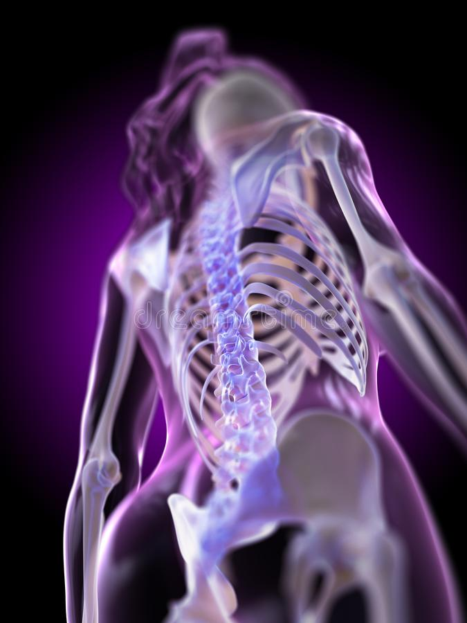 A womans spine. 3d rendered medically accurate illustration of a womans spine vector illustration
