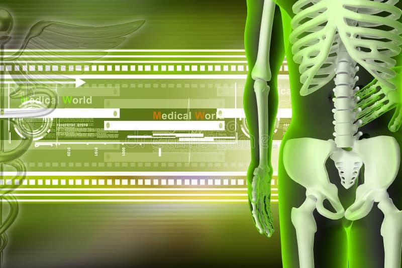 3d rendered Skeleton. In color background vector illustration