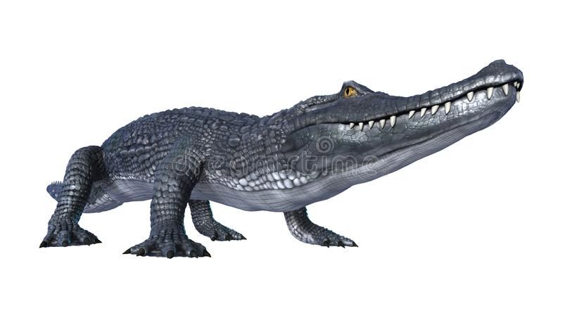 3D Rendering Alligator Caiman on White vector illustration