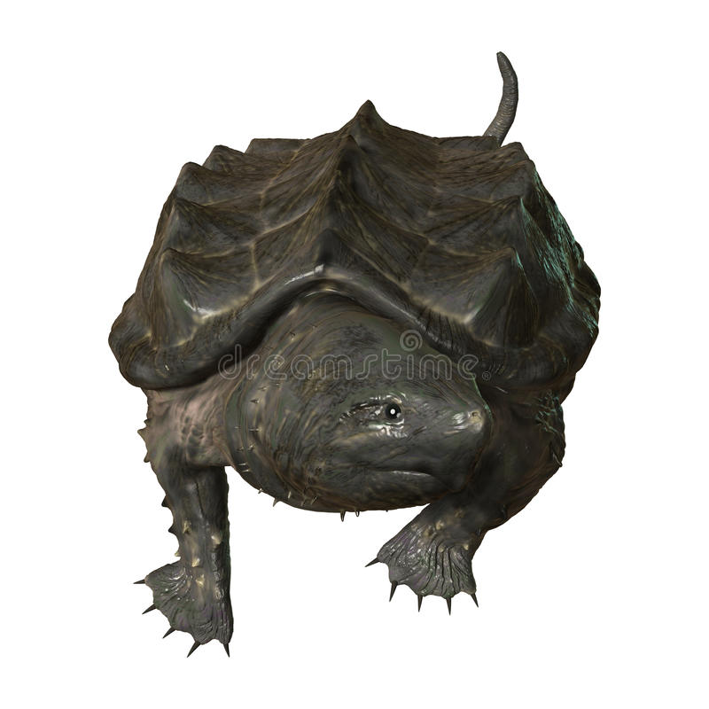 3D Rendering Alligator Snapping Turtle on White. 3D rendering of an alligator snapping turtle isolated on white background stock illustration